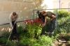Pflege des Kräutergartens